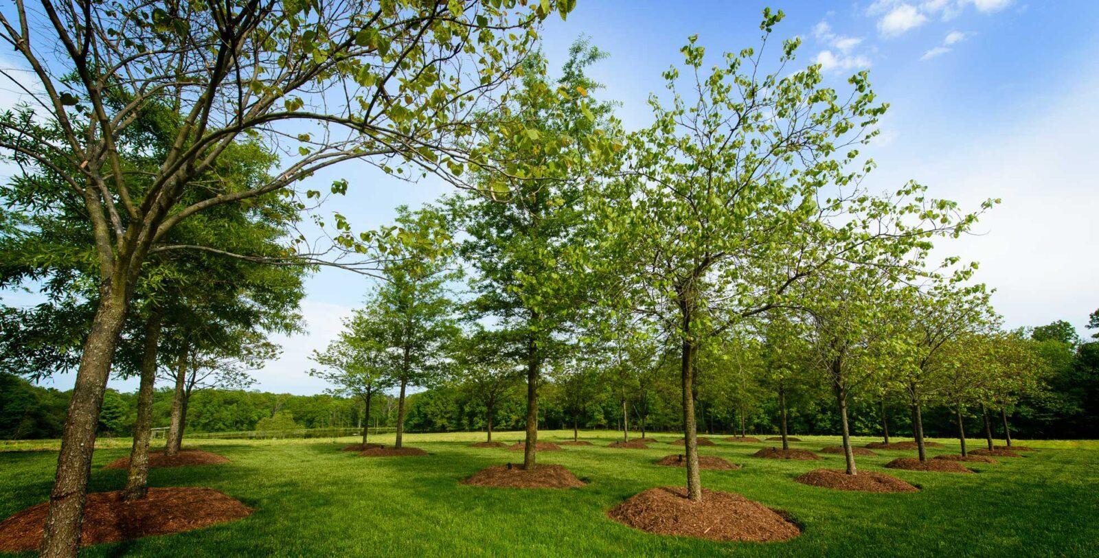 Arbor Day - Plant a Tree!