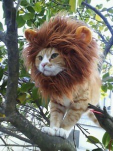 Fun Halloween Costume Ideas For Your Pets Granite