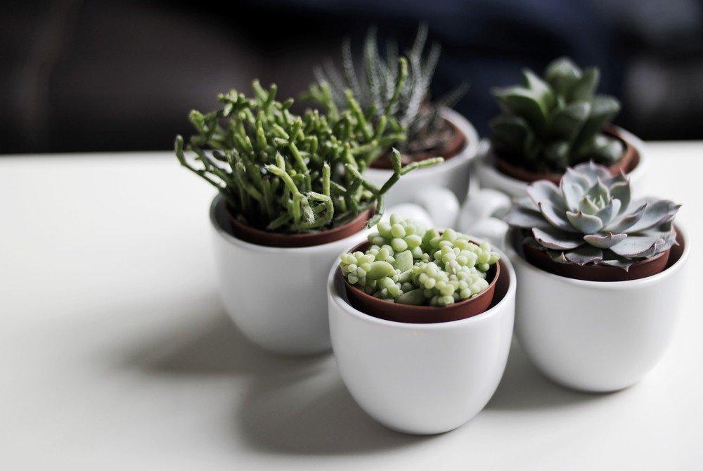 Best Indoor Low Maintenance Plants For Your Kitchen