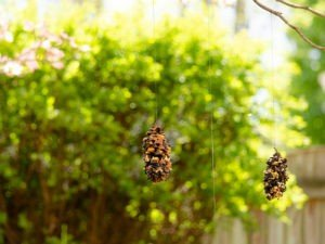 GT Birdfeeder made with pine cones hanging outdoors