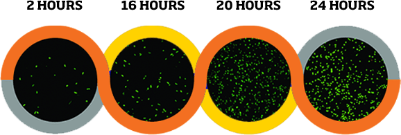 Bacteria growth over the course of 2 to 24 hours on ordinary surface